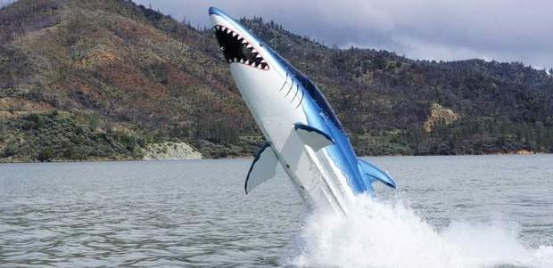 ... أفضل الأماكن لمشاهدة الحيتان في جميع أنحاء العالم ...